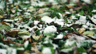 Winter is coming…But don't you fret! A new lawn can still be on your list! -
