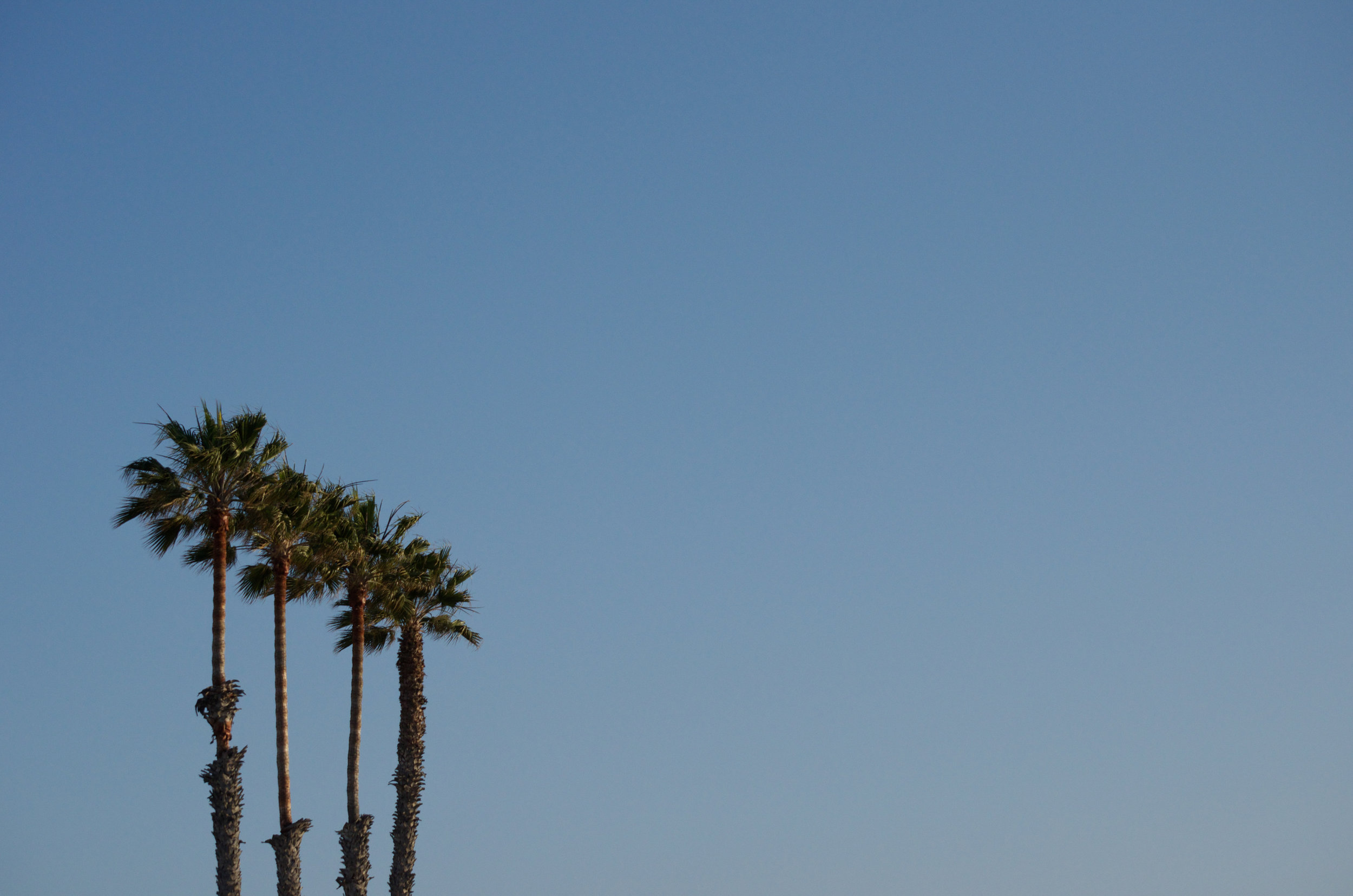 Californication -