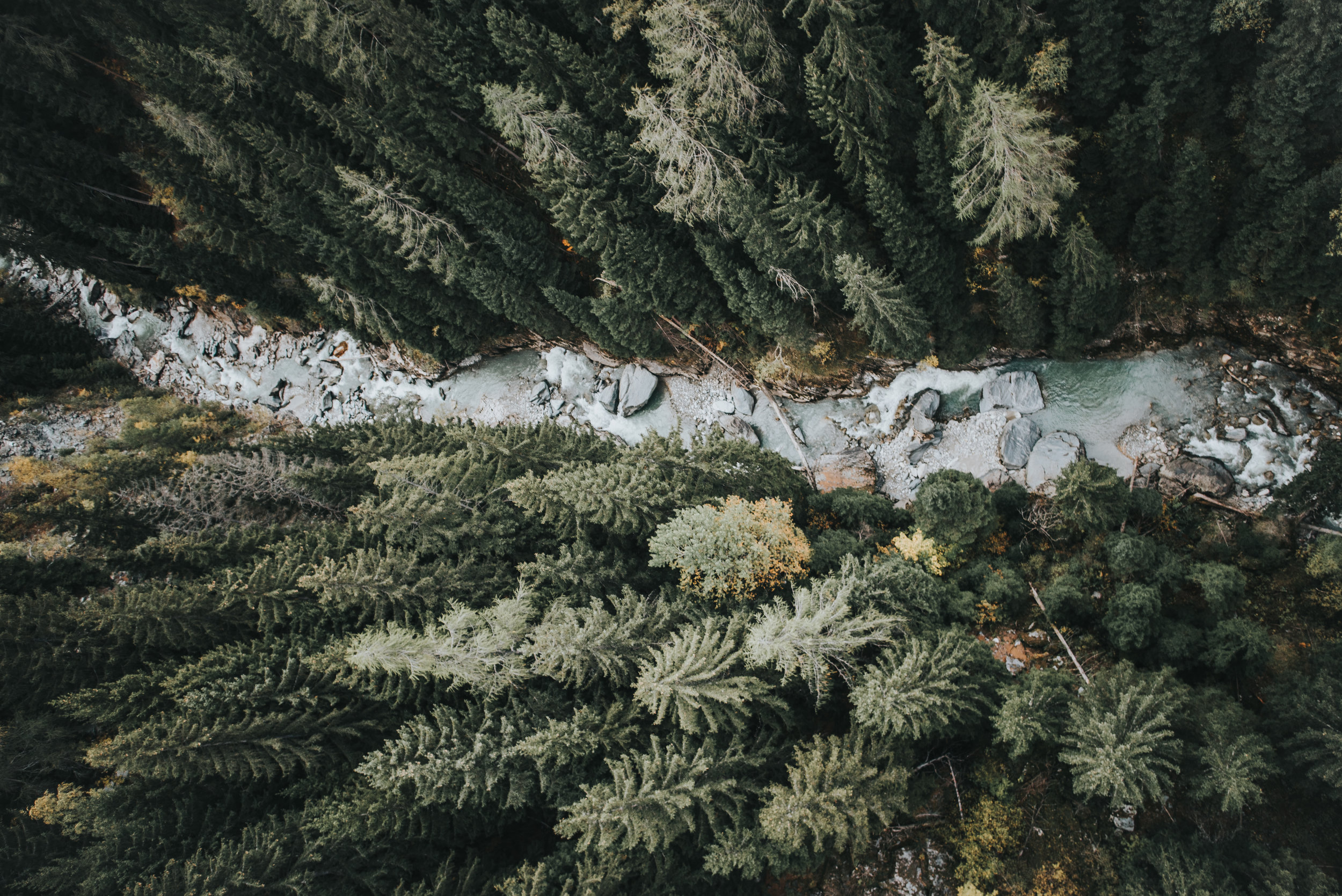 bossfight-free-high-stock-photos-river-water-trees-forest.jpg