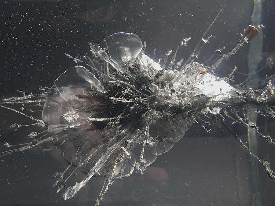 The Propeller Group, process detail,  The AK-47 vs. the M16 , 2015. Fragments of AK-47 and M16 projectiles encased in ballistic gelatin.