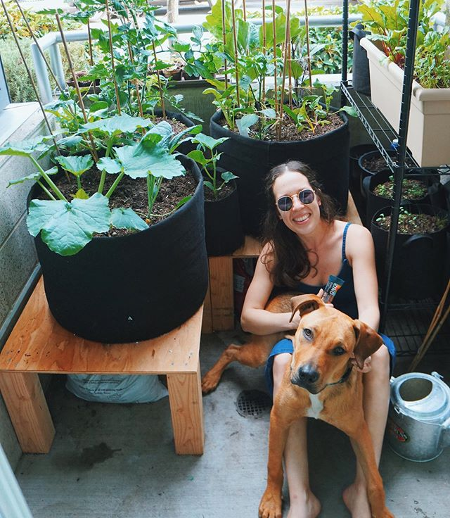 welcome to my garden! well, sort of. matt does all the work, but i do 50% of the eating 😏 . we've turned our miniature 5x6 ft patio into a productive lil veggie patch with tomatoes, zucchini, lettuce, radish, cucumber, all the herbs, and more 🌱🌱🌱 . after work it's become a habit to chill out here with the plants, snuggle with elwood (who thinks he's a lap dog 🐶), and take a moment to refuel with a @kindsnacks bar #BeKindToYourself. the dark chocolate nuts and sea salt is SO.GOOD. and it feels like a treat, but almonds are the first ingredient so i'm not completely ruining my dinner 🤗 . #KINDcollective #ad