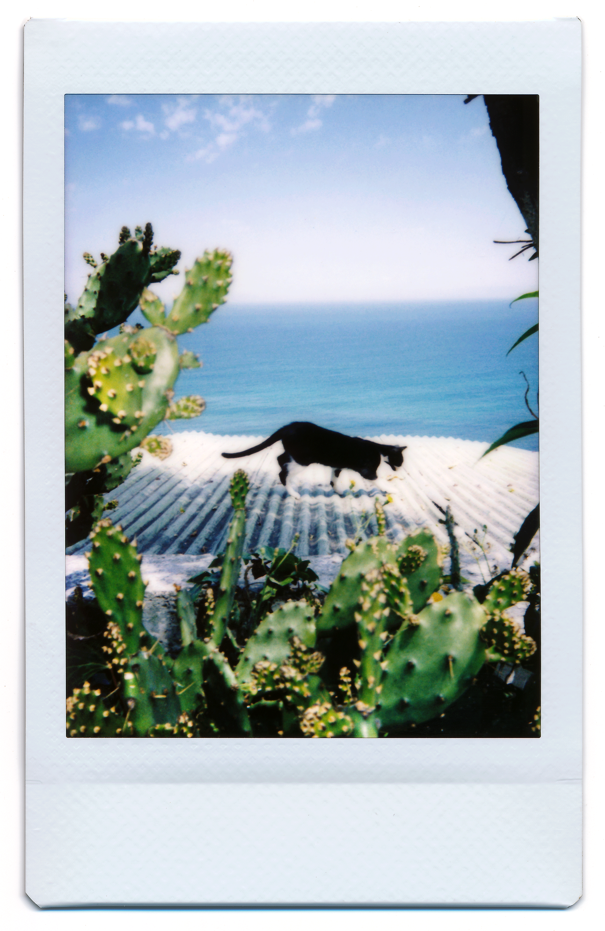 The Cat Outside  takes place in Tangier, Morocco at the old haunts of various beat generation writers and ex-pats, including William S. Burroughs to whom the series' title is in reference to.