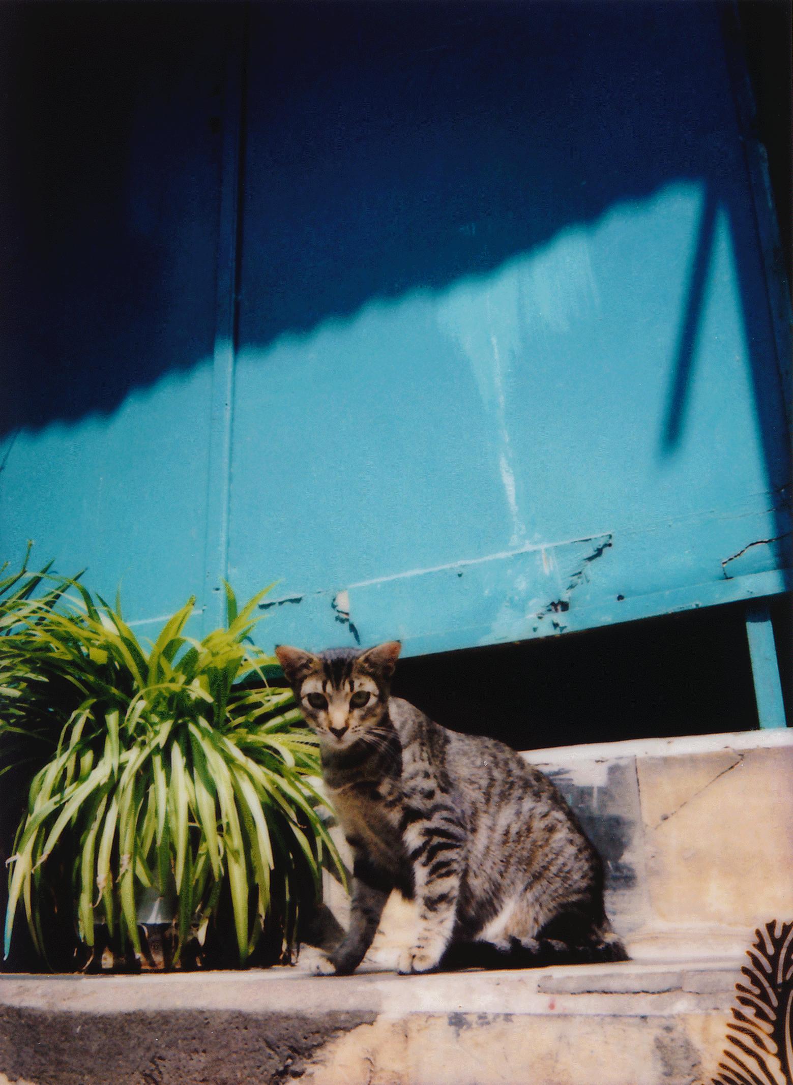 cat6 copy.png
