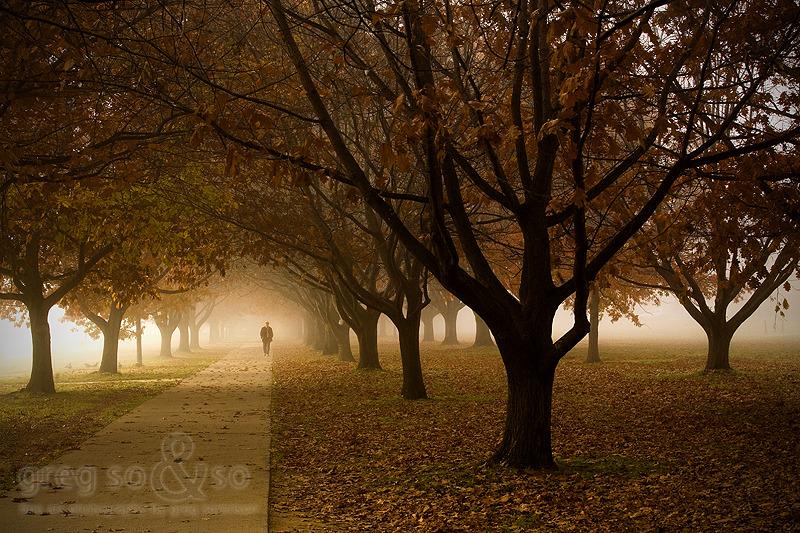 Autumn In Parkes