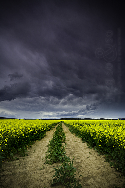 The Yellow Road