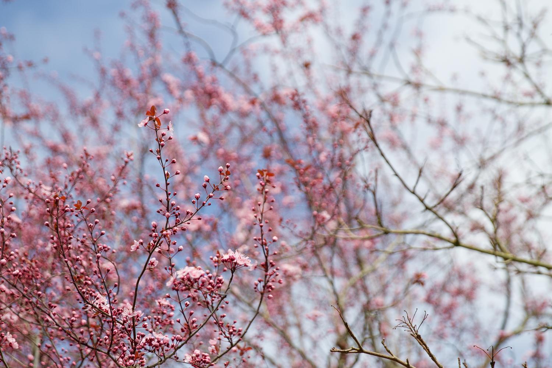 flowers-spring-1.jpg