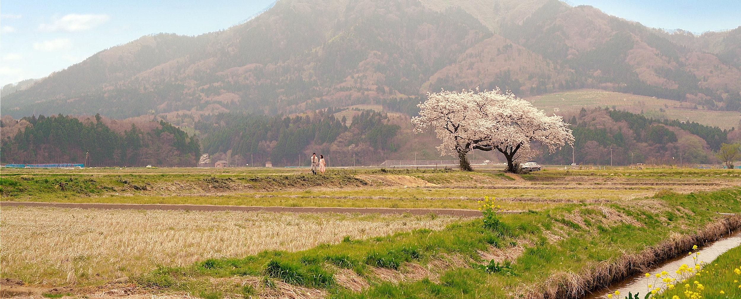 hamonika_spring_images17.jpg