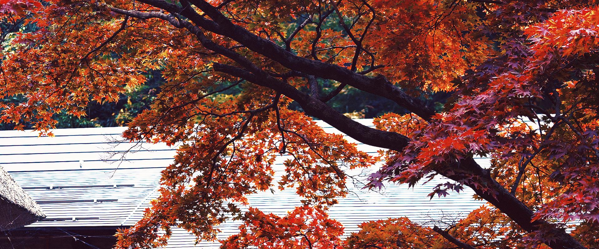 nishikan007.jpg