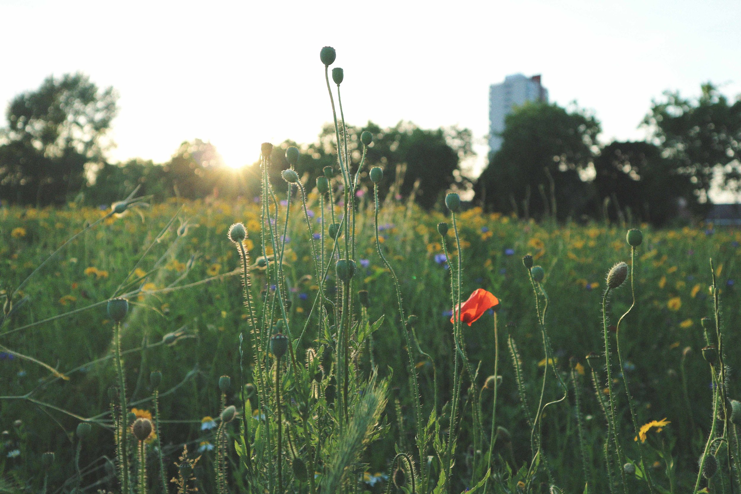Finding Nature -