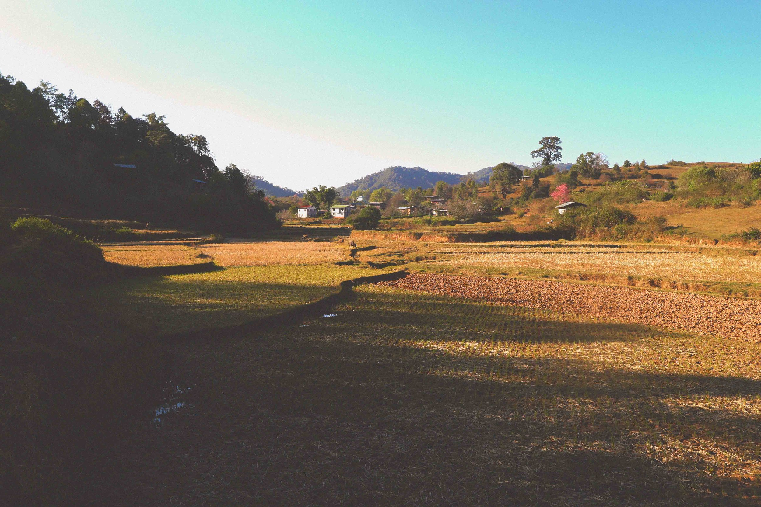 Sun setting on a rice paddy in the dry season