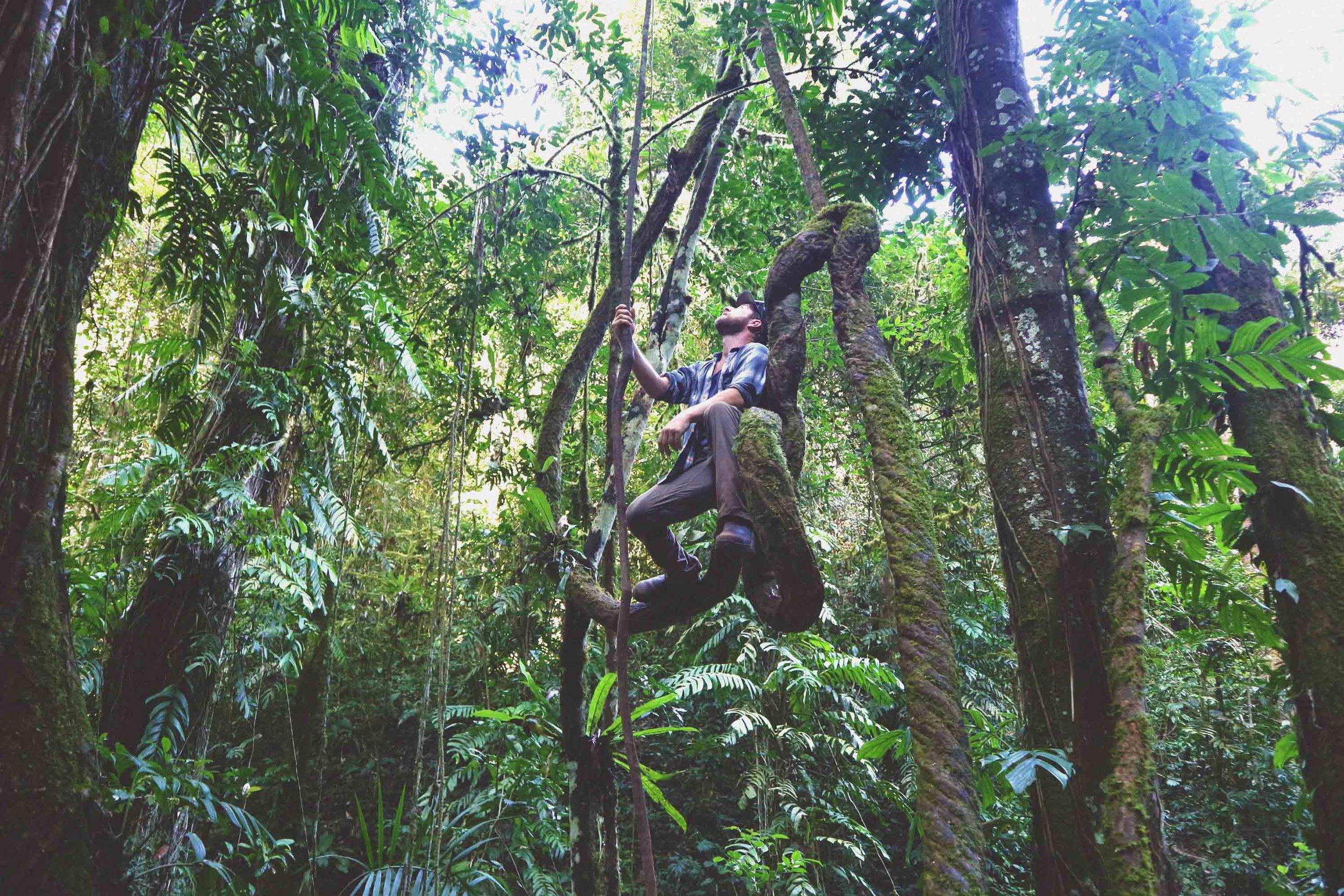 Nam Ha Jungle -