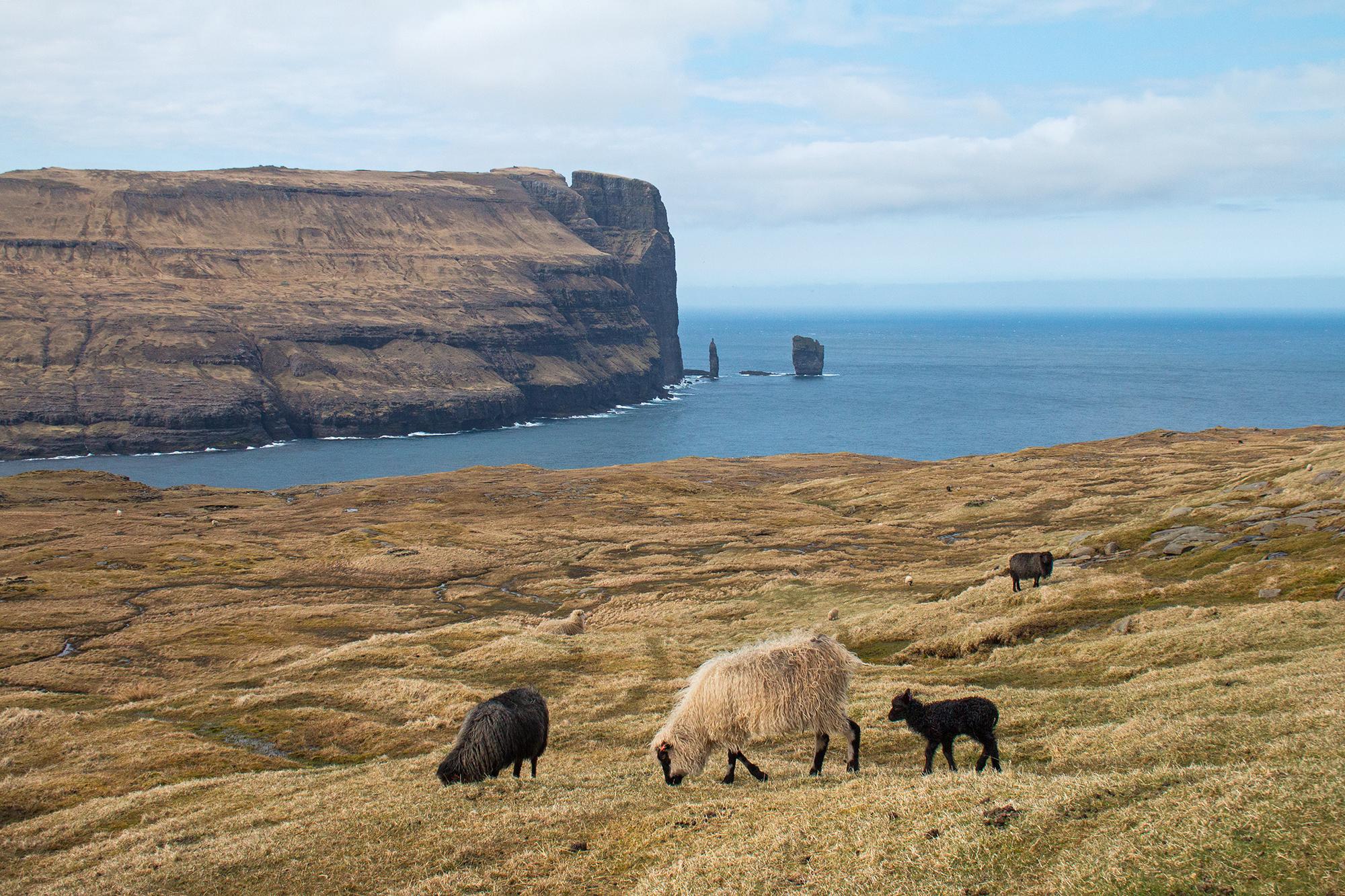 Färöarna PNG 9_redigerad_1.png