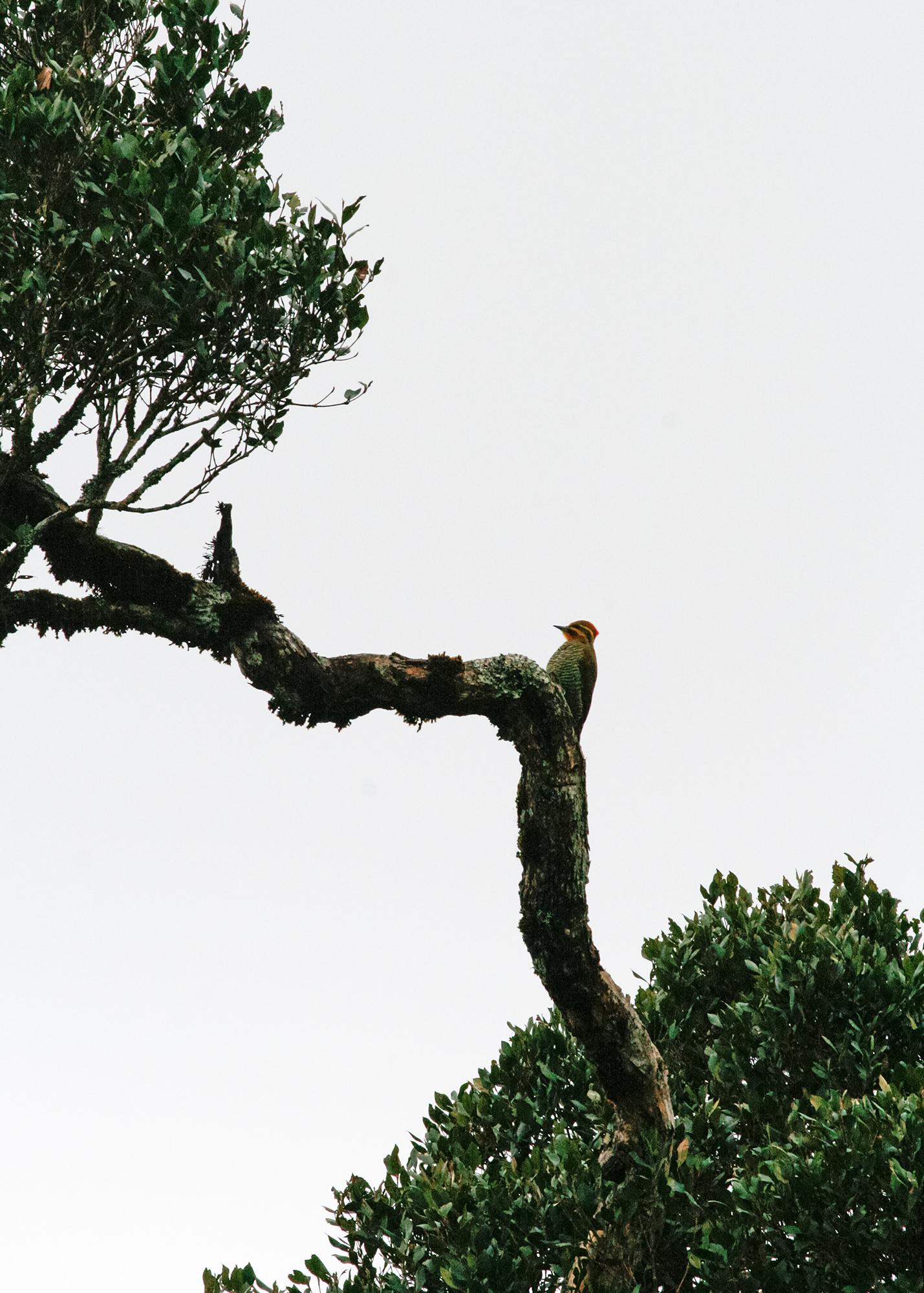 Woodpecker JPEG_web.jpg