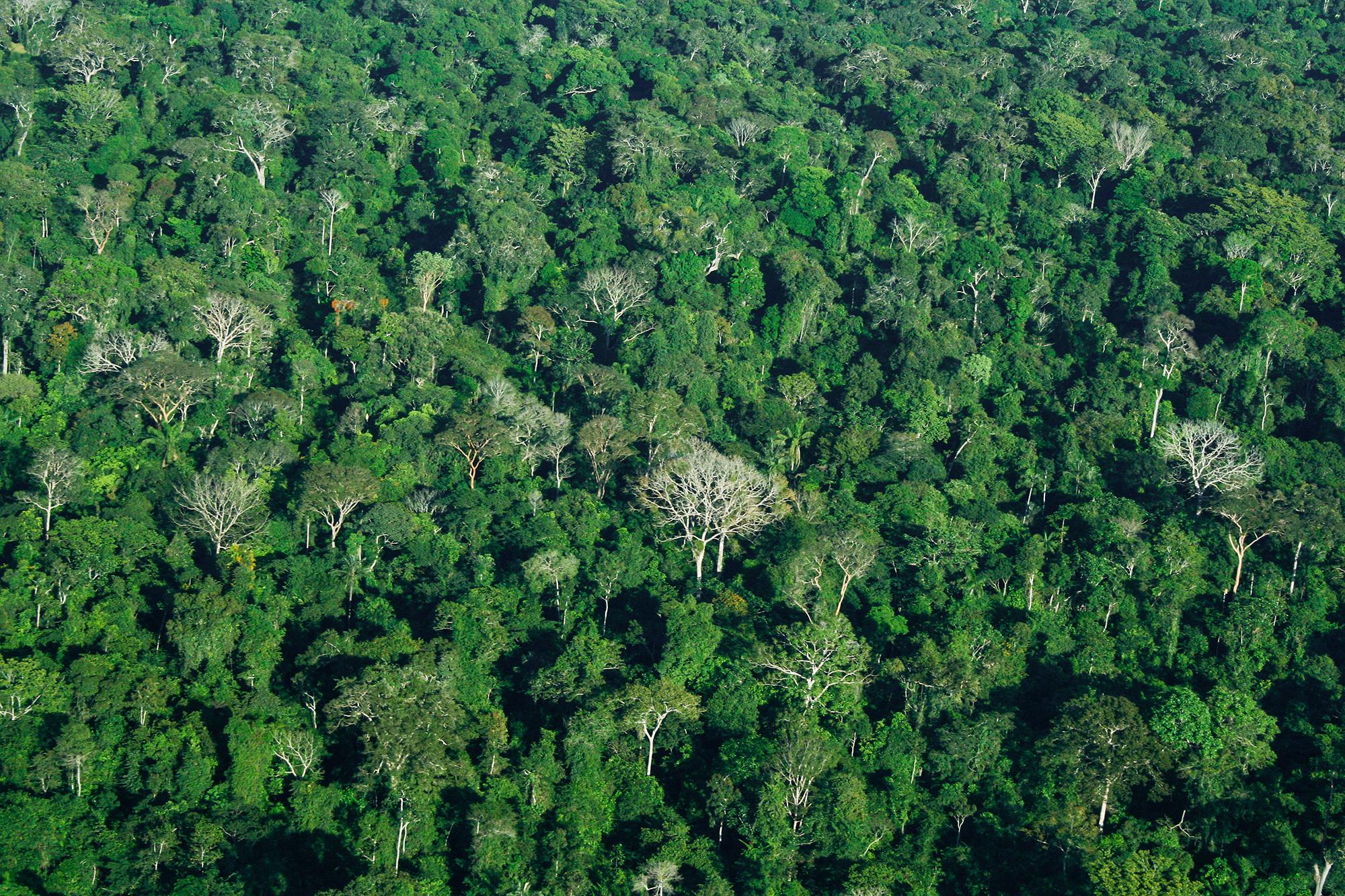 Amazonas JPEG_web 2.jpg