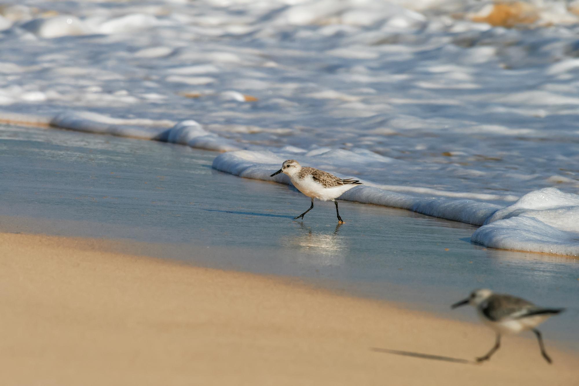 Sandlöpare JPEG_web 9.jpg