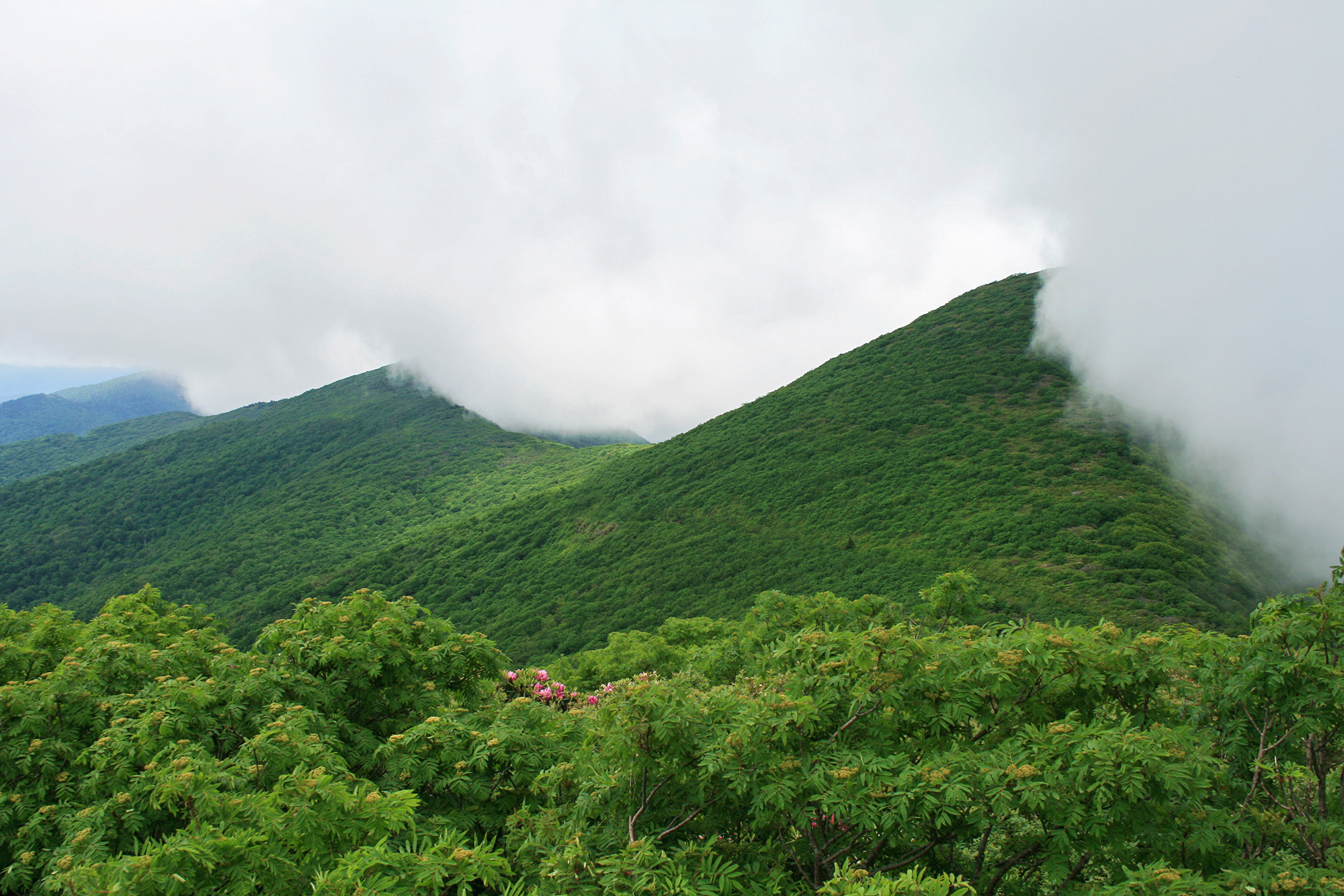 Blue Ridge Mountains 4 JPEG_web.jpg