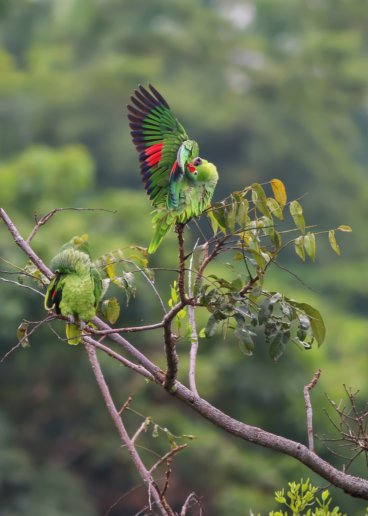 Parrots-JPEG_web.jpg