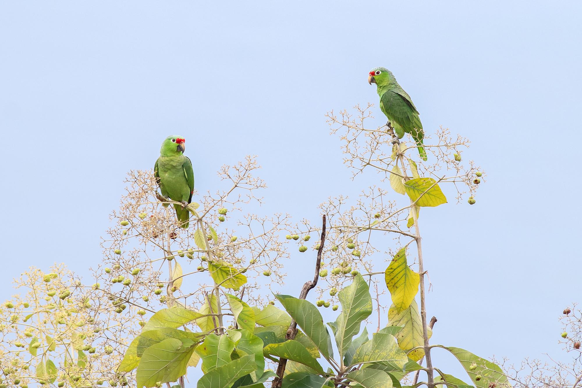 Parrots-JPEG_web 3.jpg