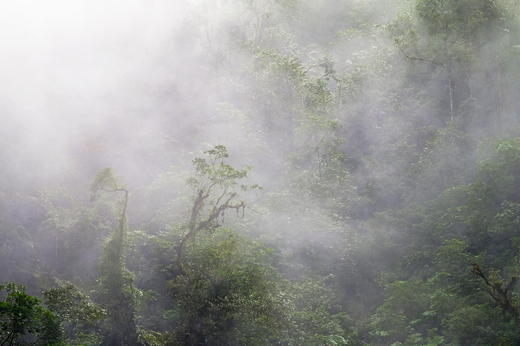 Regnskog-JPEG_web.jpg