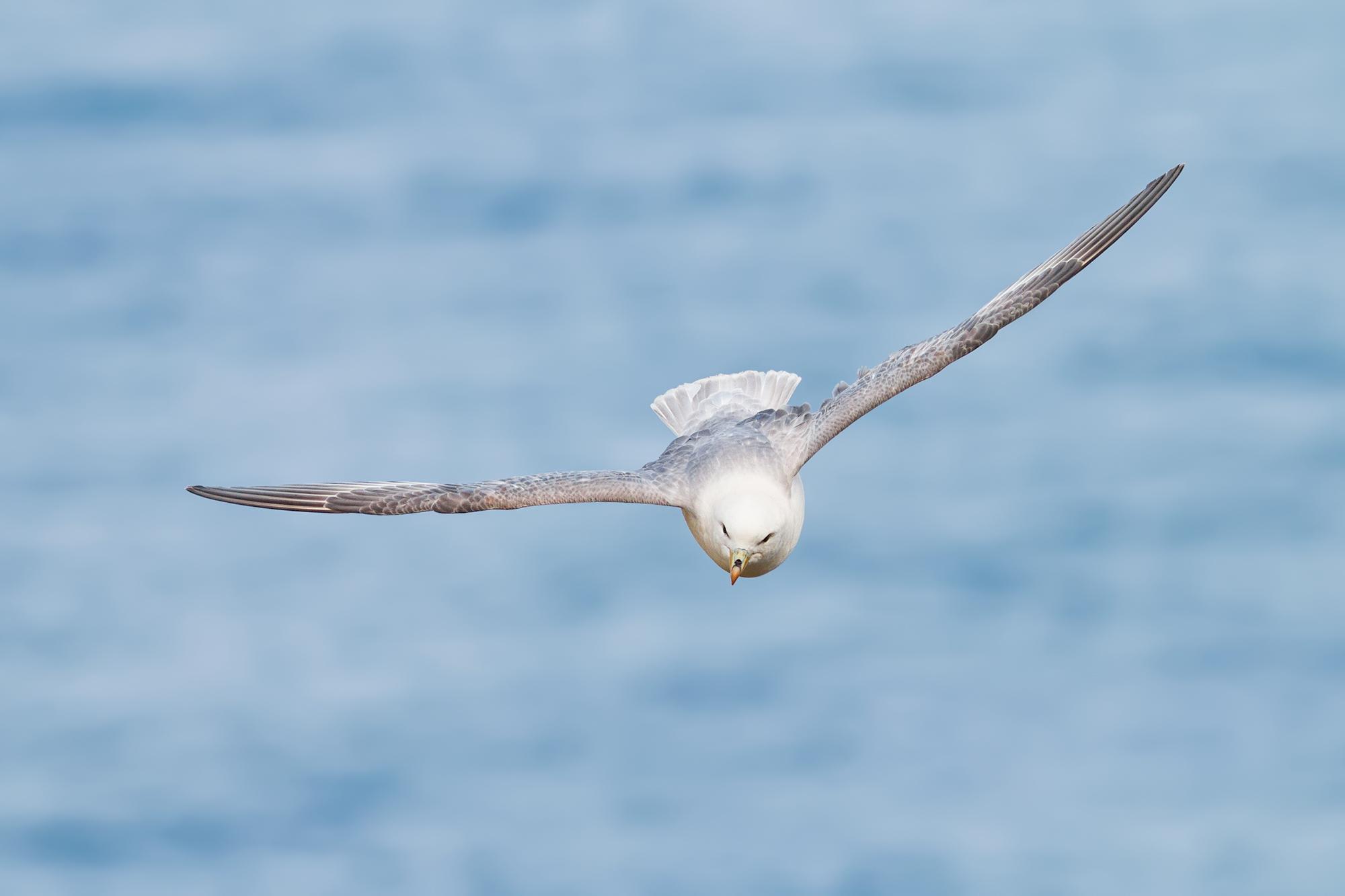 Stormfågel-JPEG_web 3.jpg