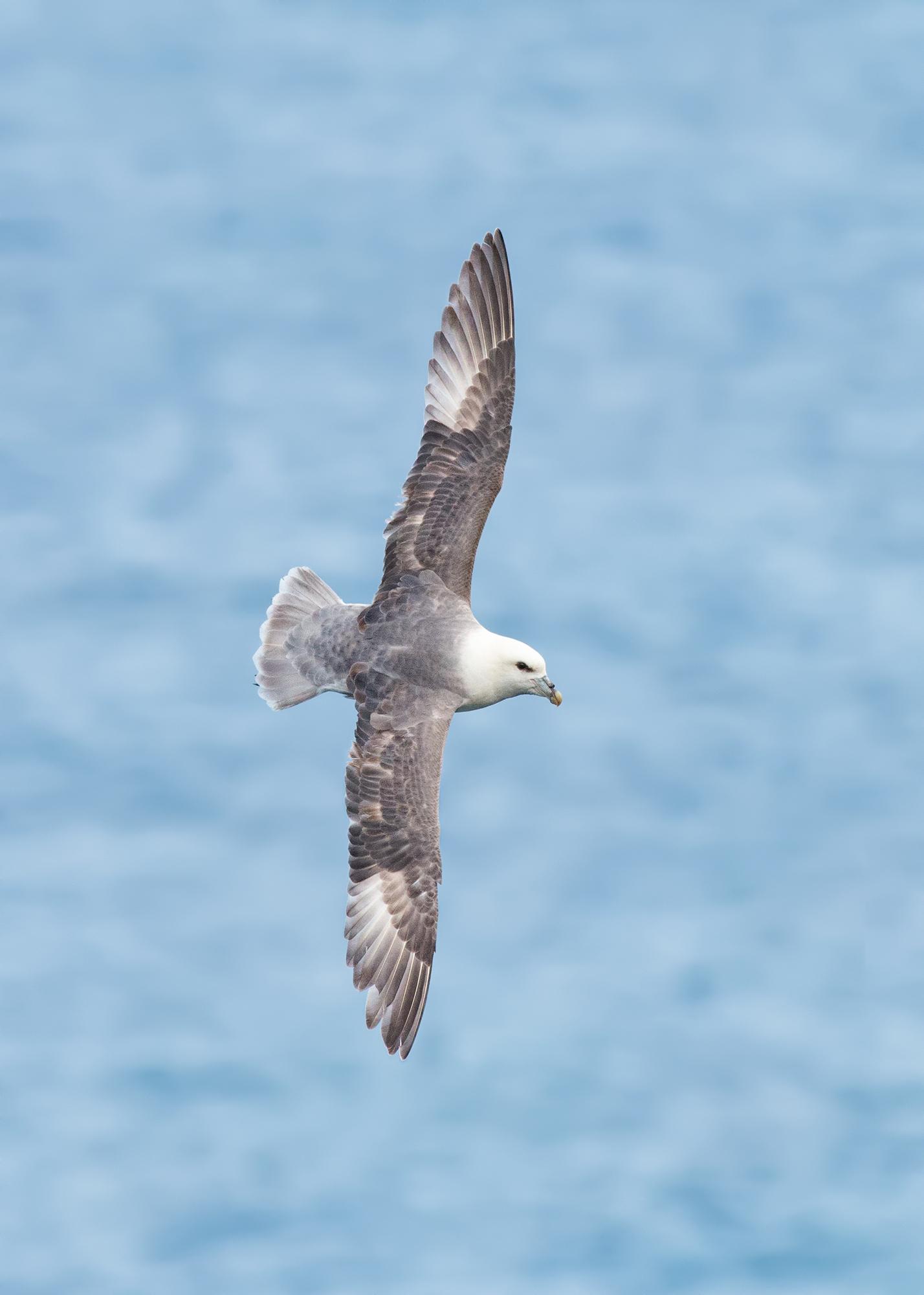 Stormfågel-JPEG_web 4.jpg