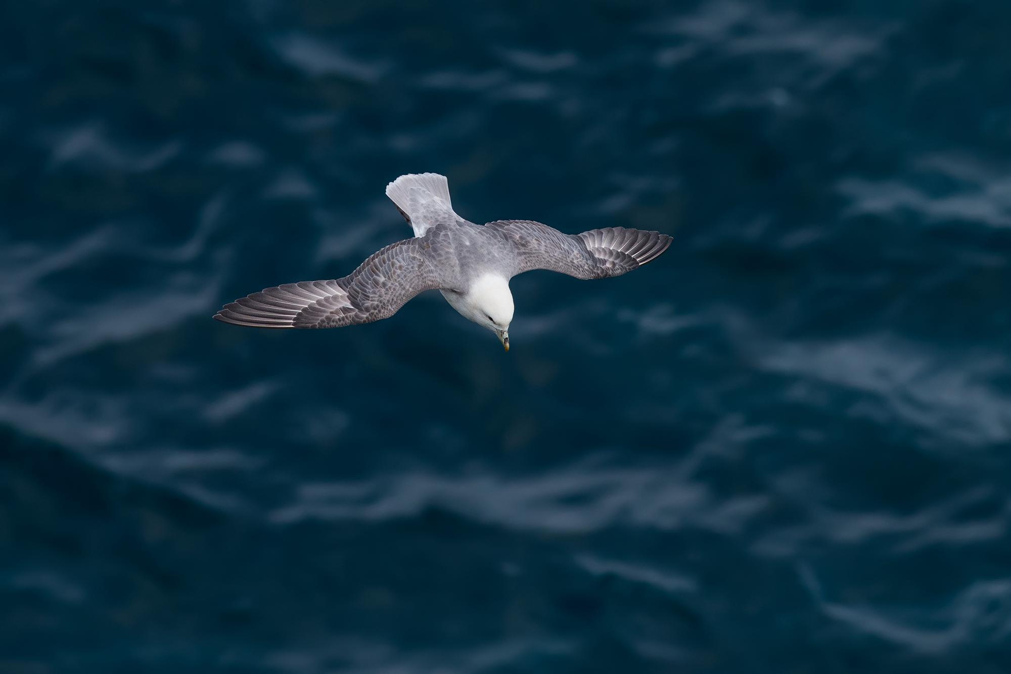 Stormfågel-JPEG_web 5.jpg