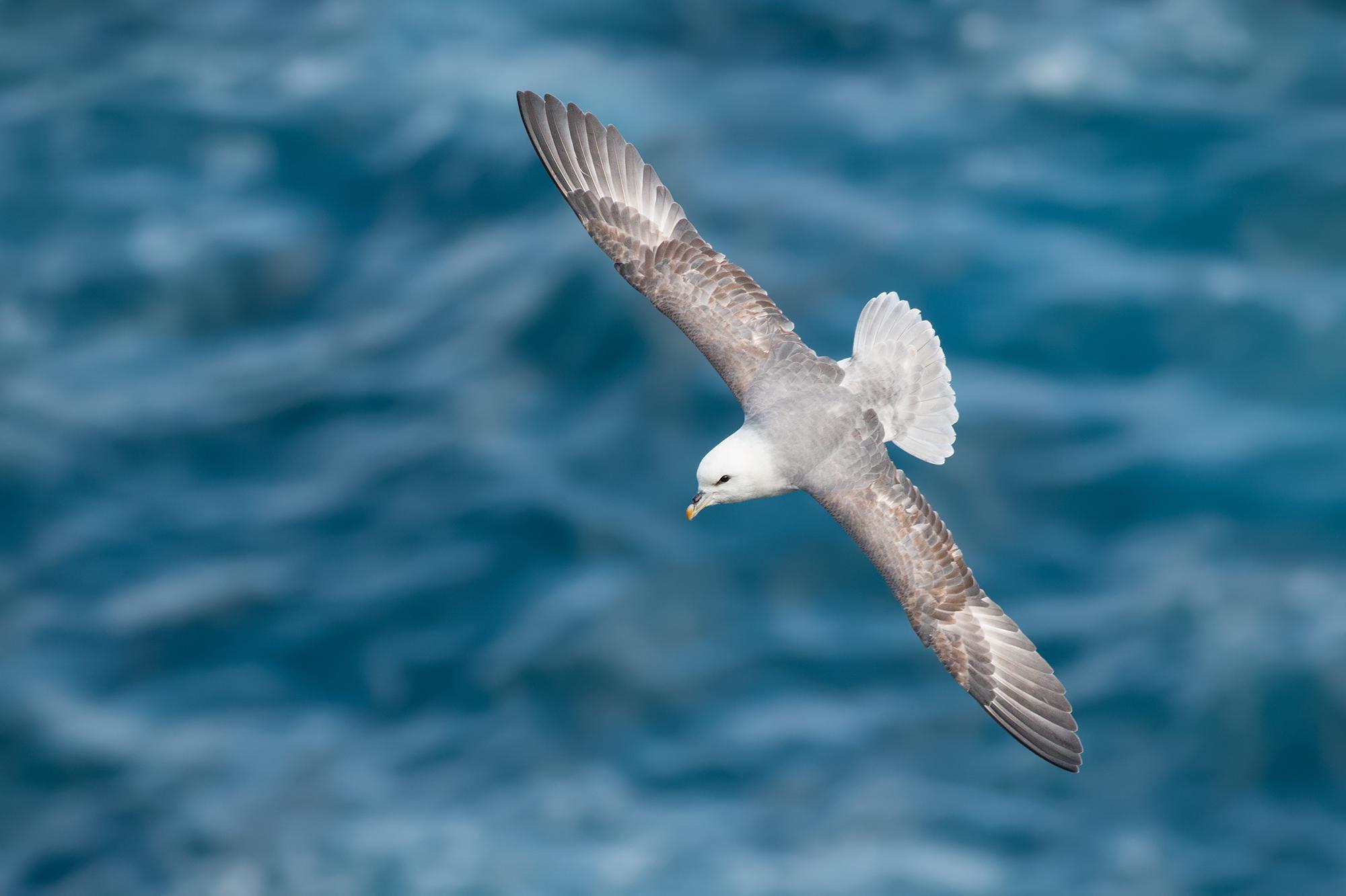 Stormfågel-JPEG_web 6.jpg
