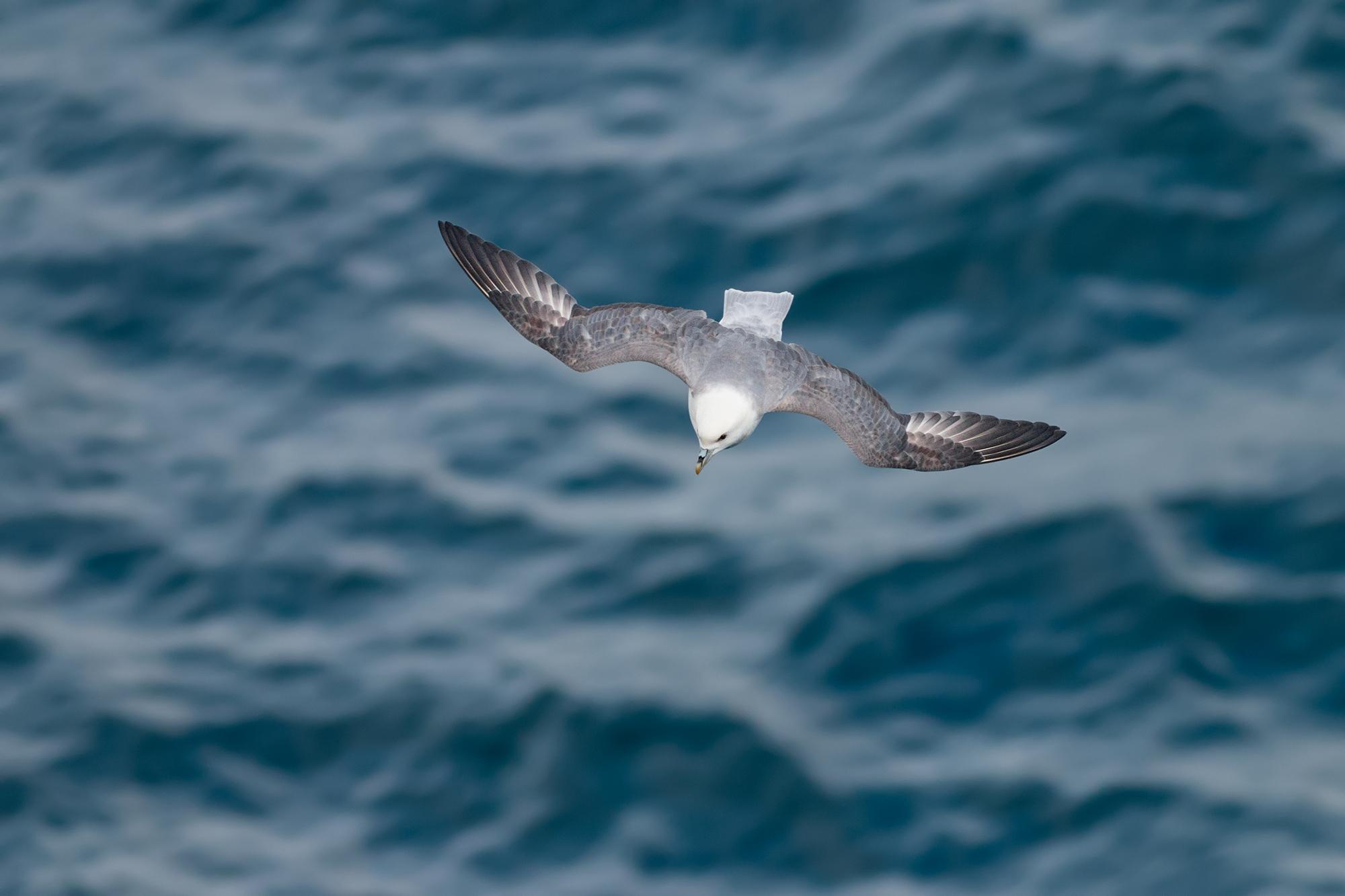 Stormfågel-JPEG_web 7.jpg