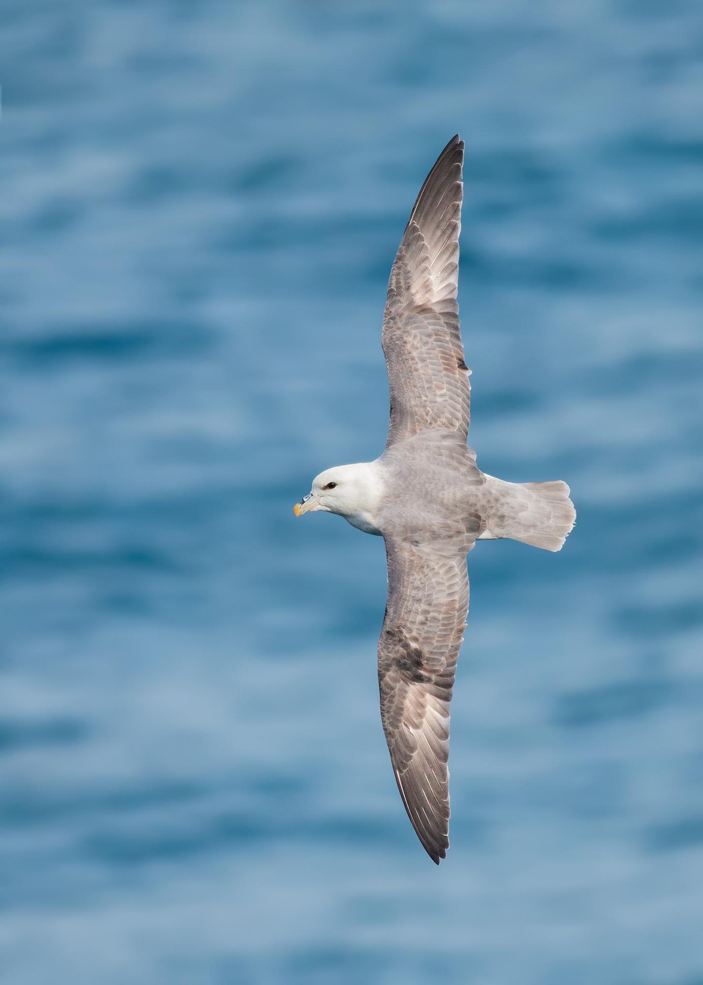 Stormfågel-JPEG_web 8.jpg
