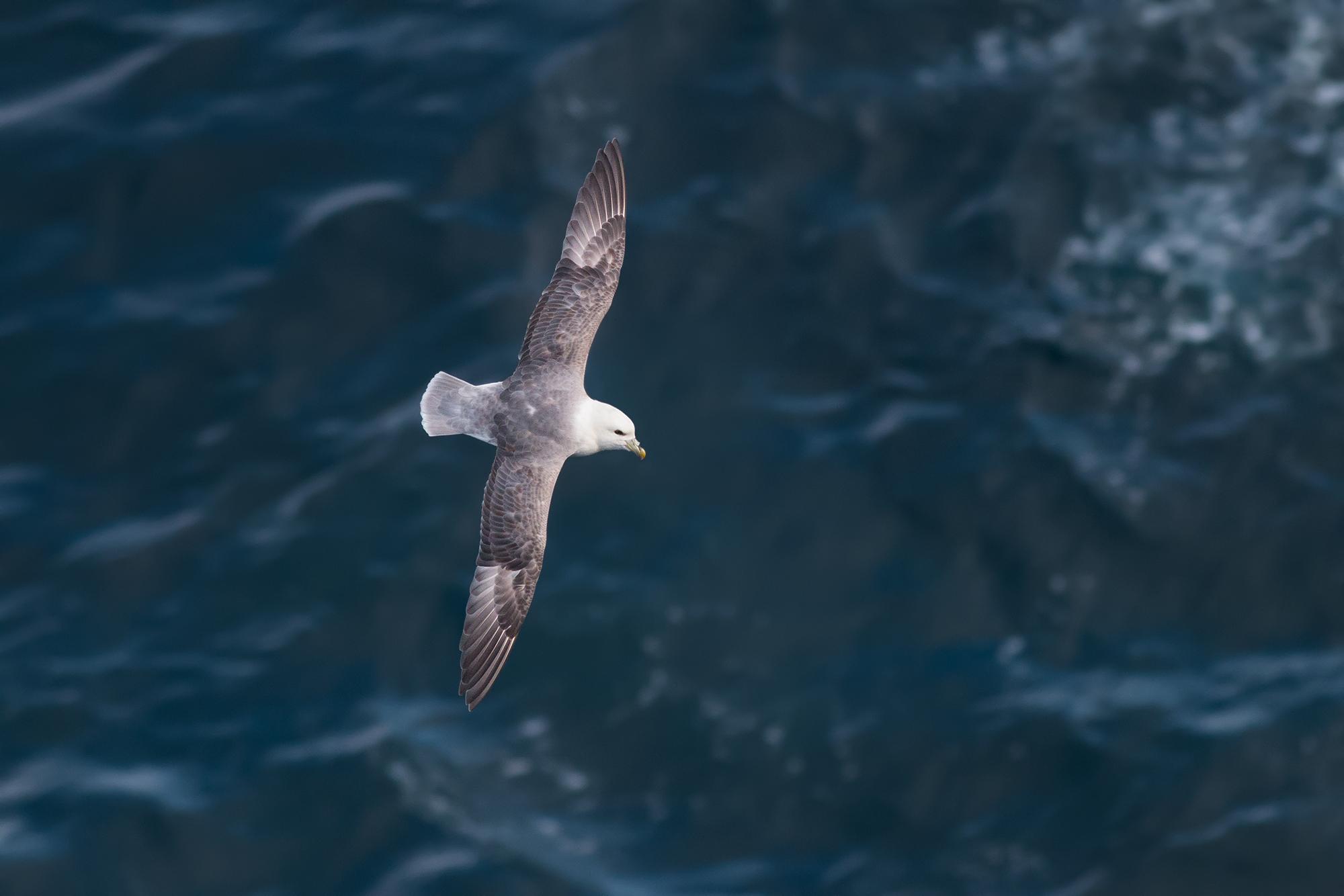 Stormfågel-JPEG_web 9.jpg