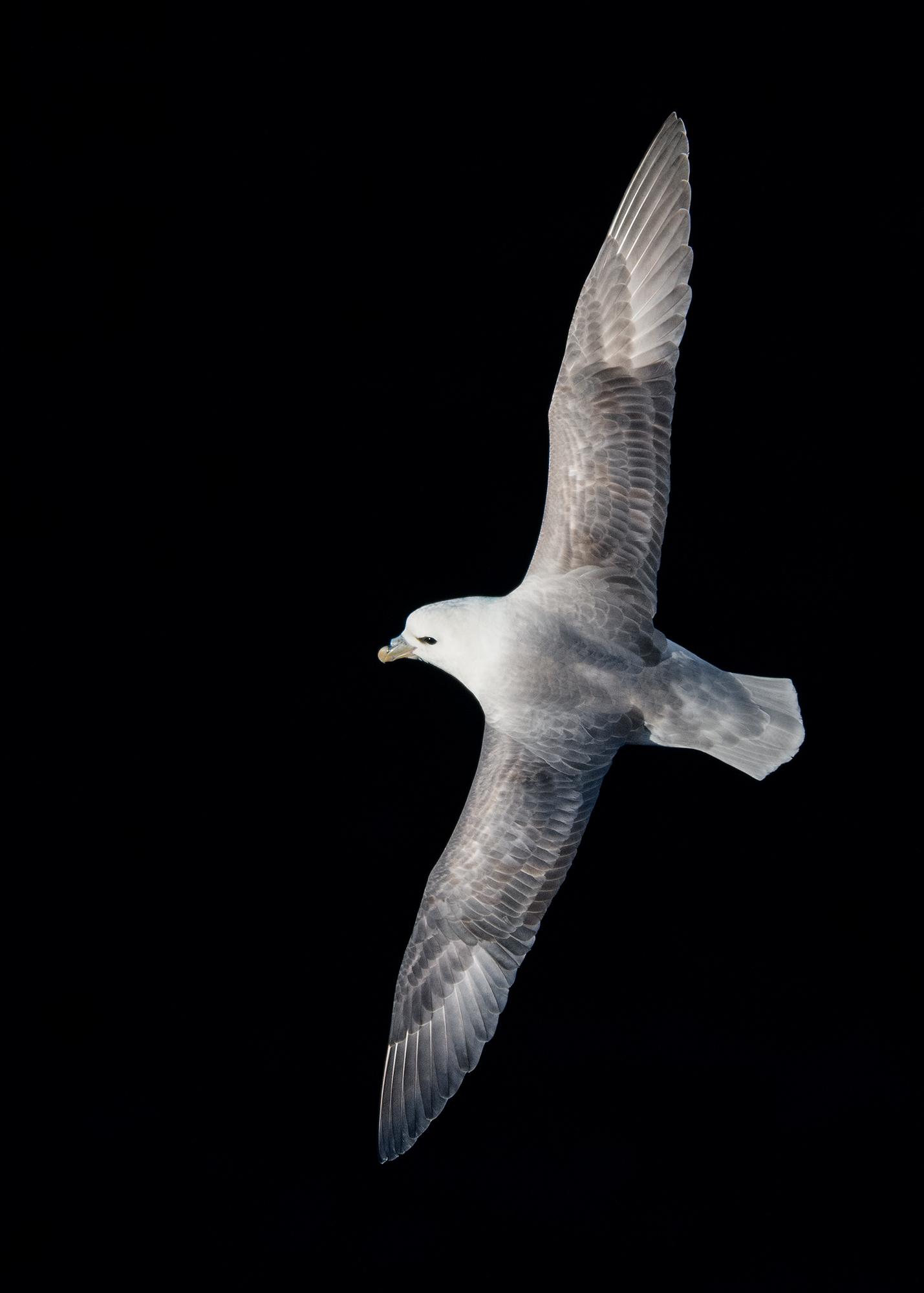 Stormfågel JPEG_web 6.jpg
