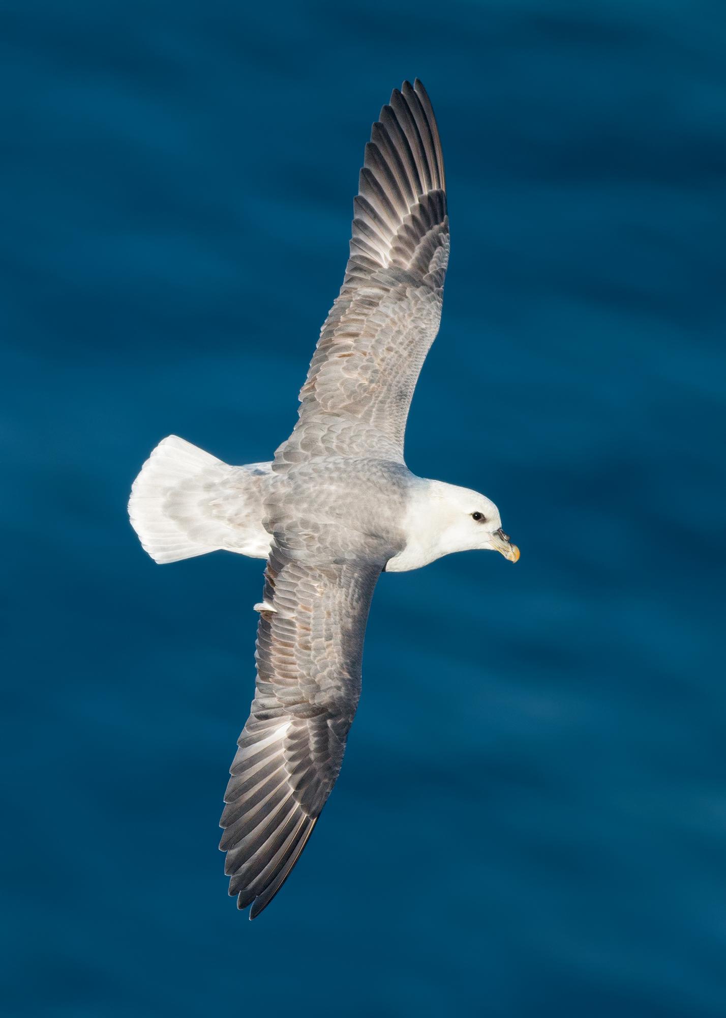 Stormfågel-JPEG_web 14.jpg