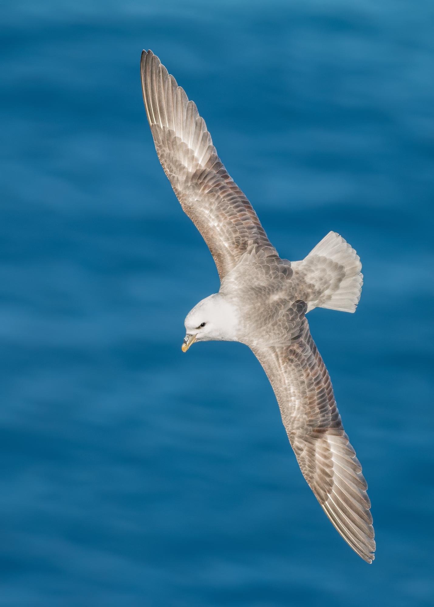 Stormfågel-JPEG_web 15.jpg
