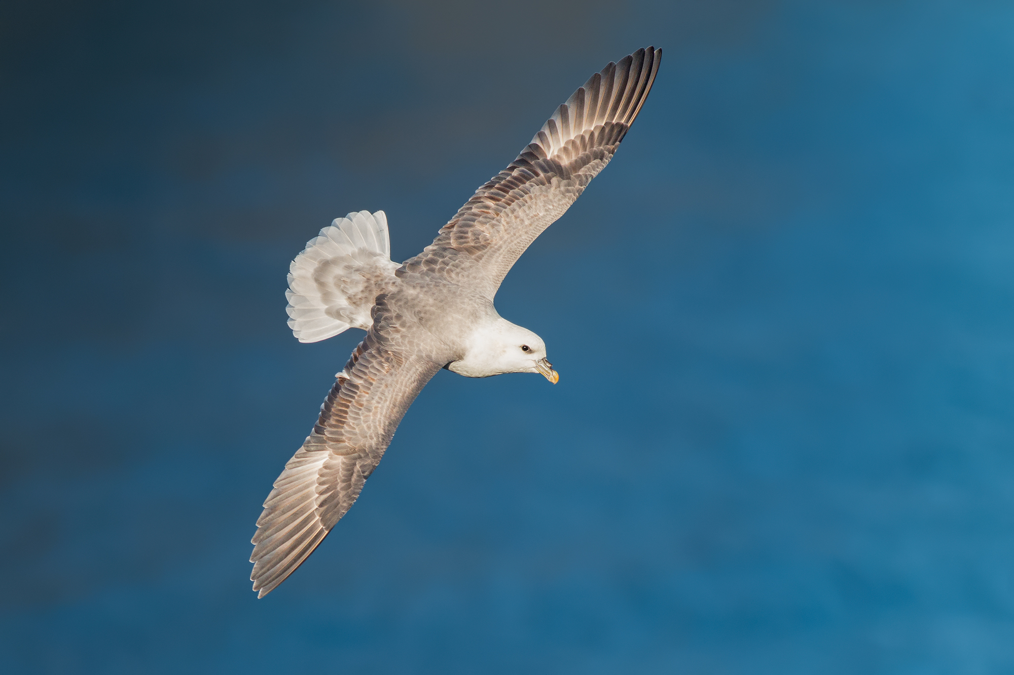 Stormfågel-JPEG_web 16.jpg