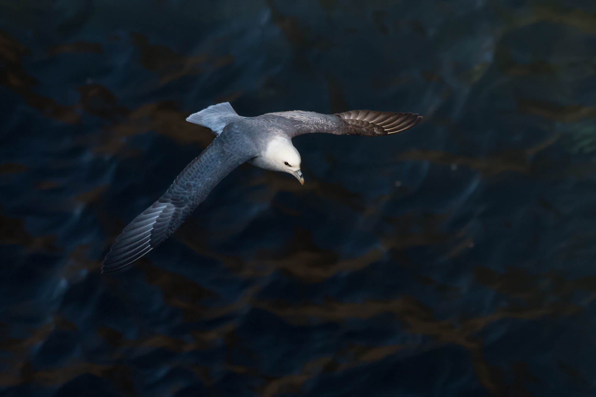 Stormfågel-JPEG_web 19.jpg