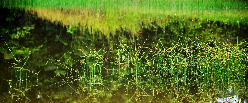 Wetland environment