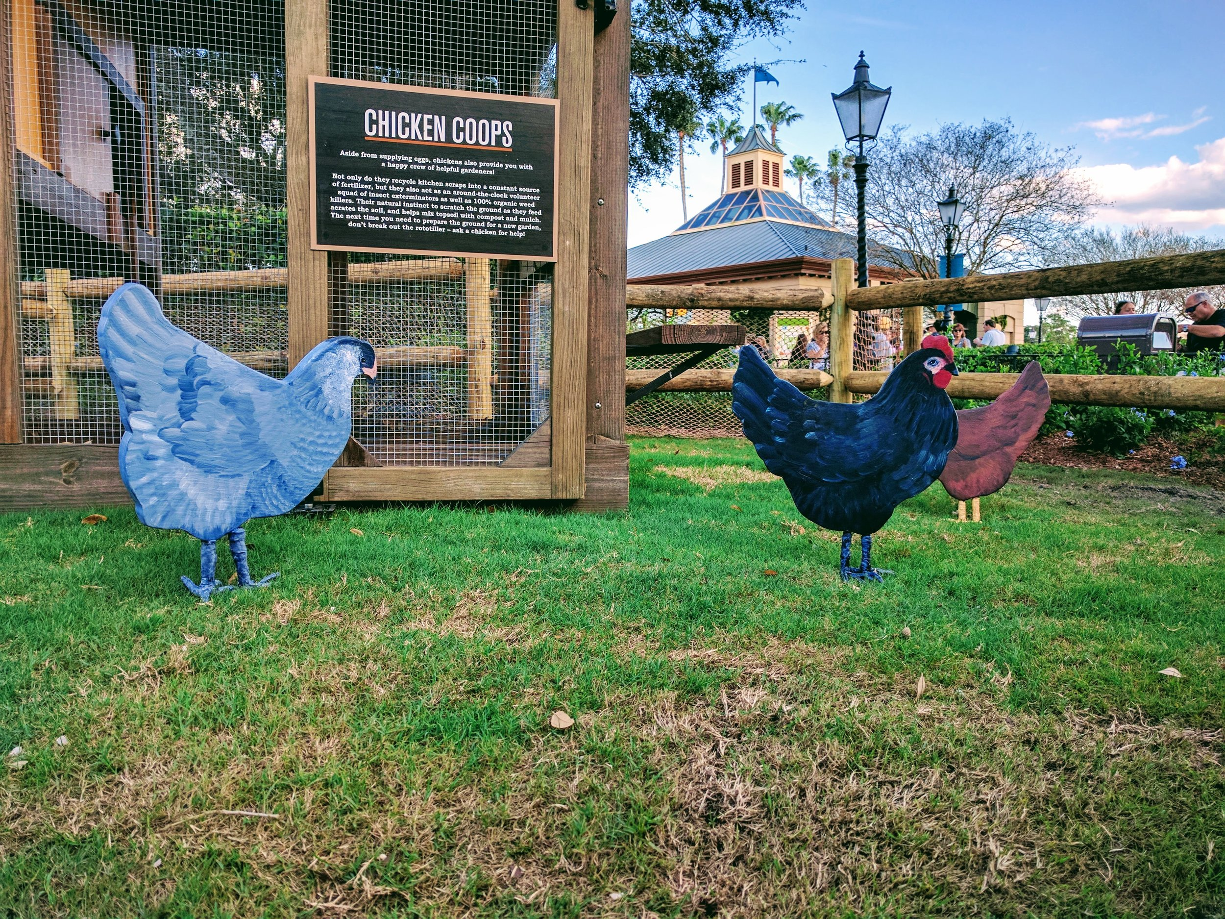 Urban Chicken farming display