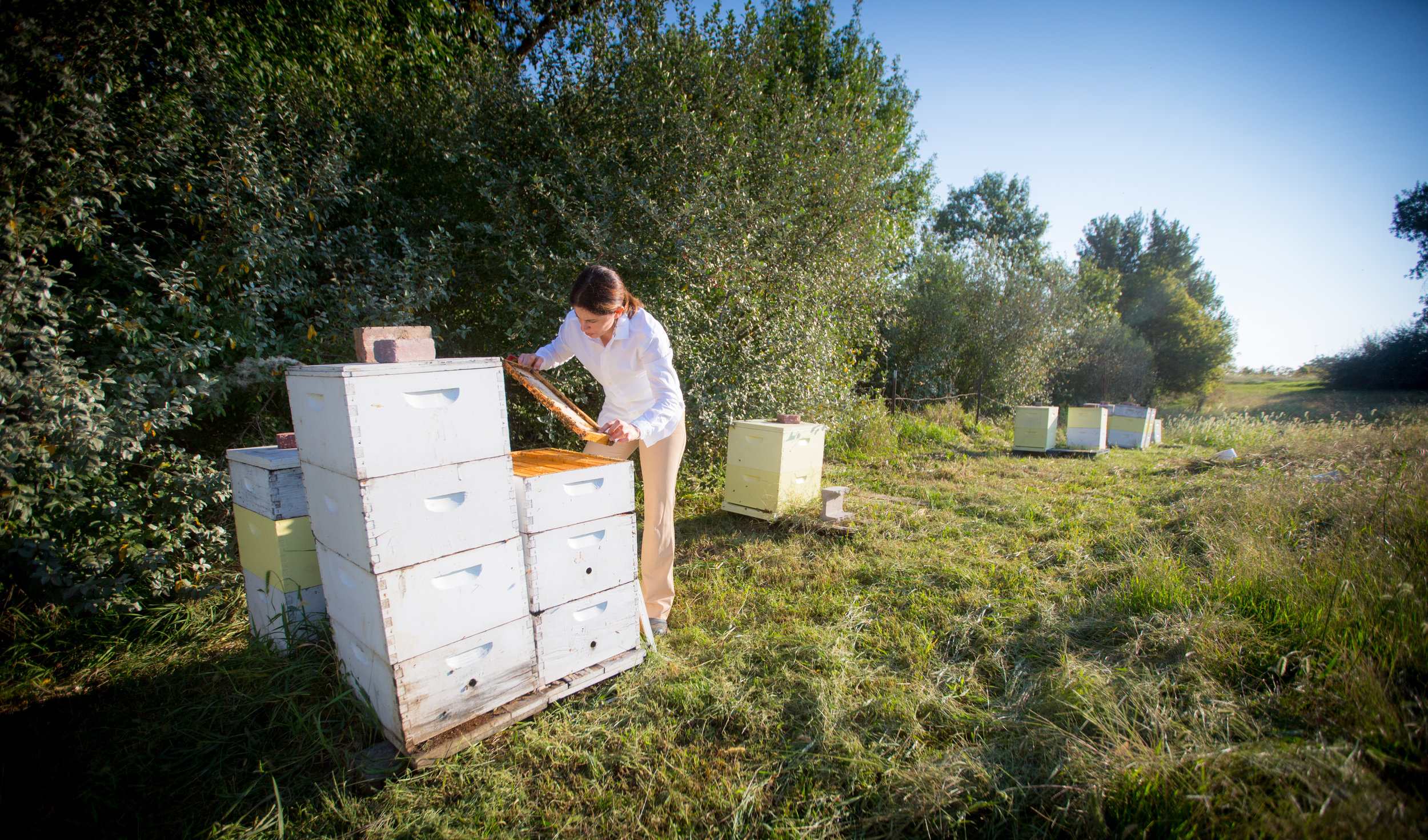 Carol checking on hives on our farm. Photo credit: Dave Weaver