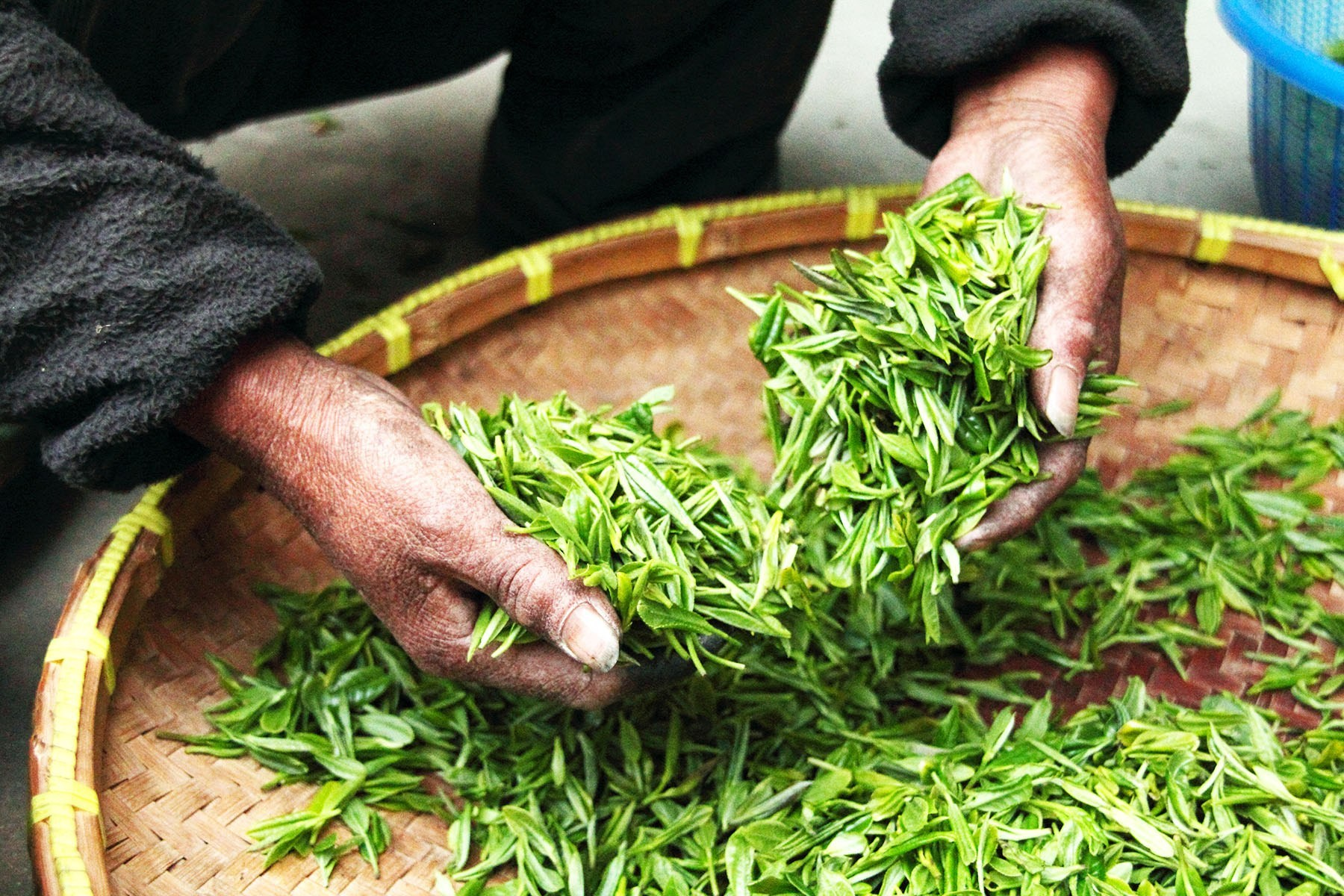 Tea-Hands-Commodity-Atlas.jpg