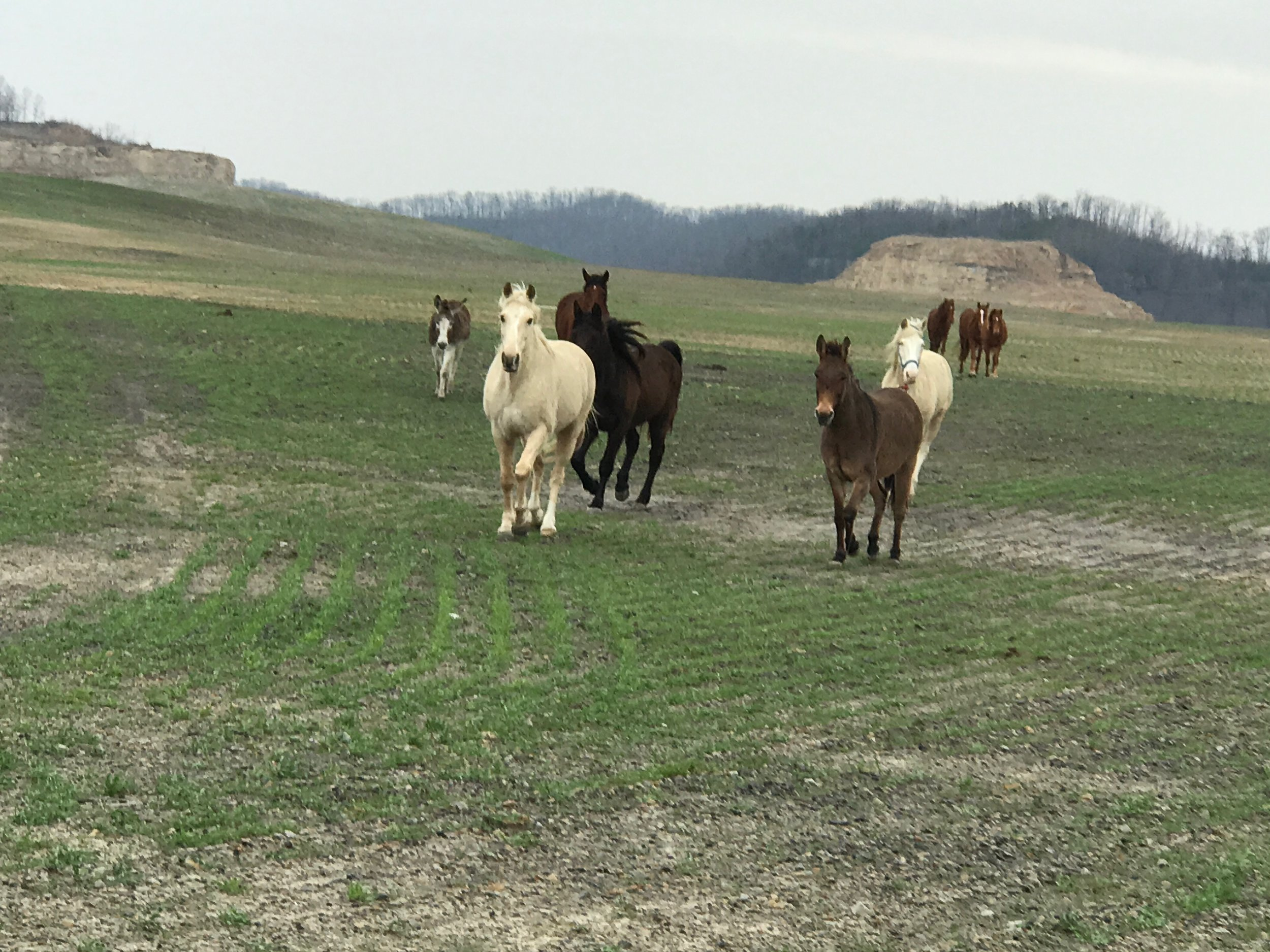 Small herd in Perry County