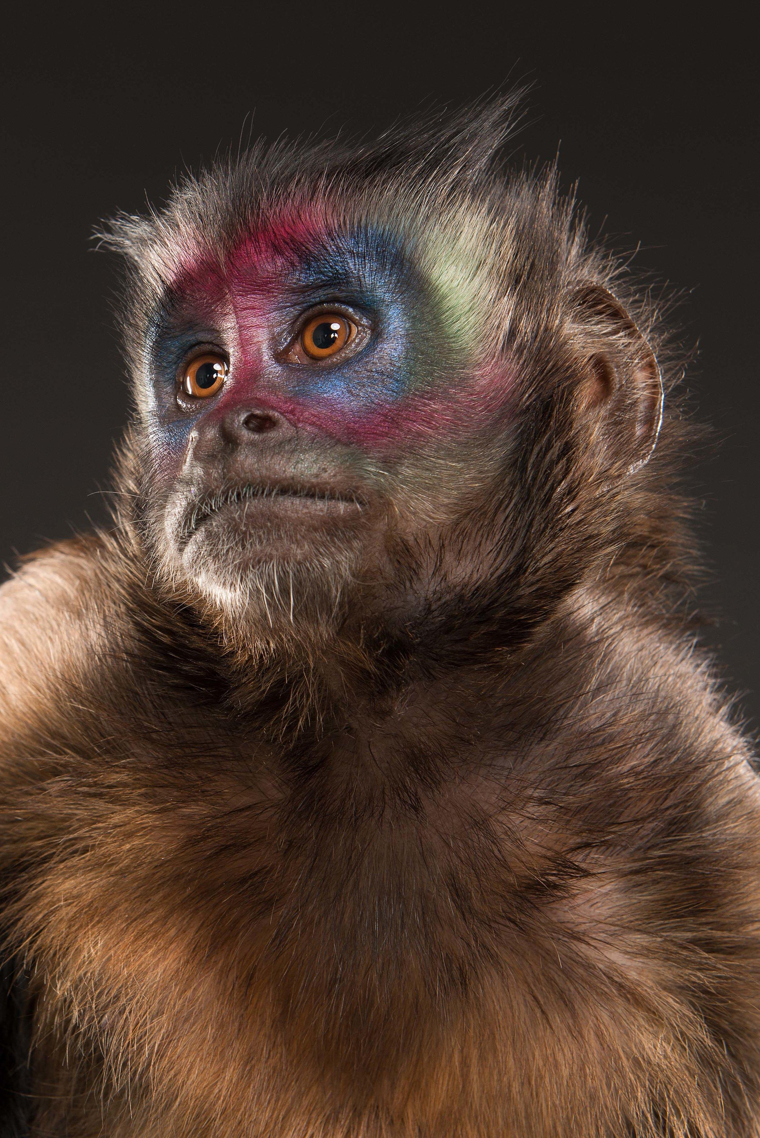 Monkey VII