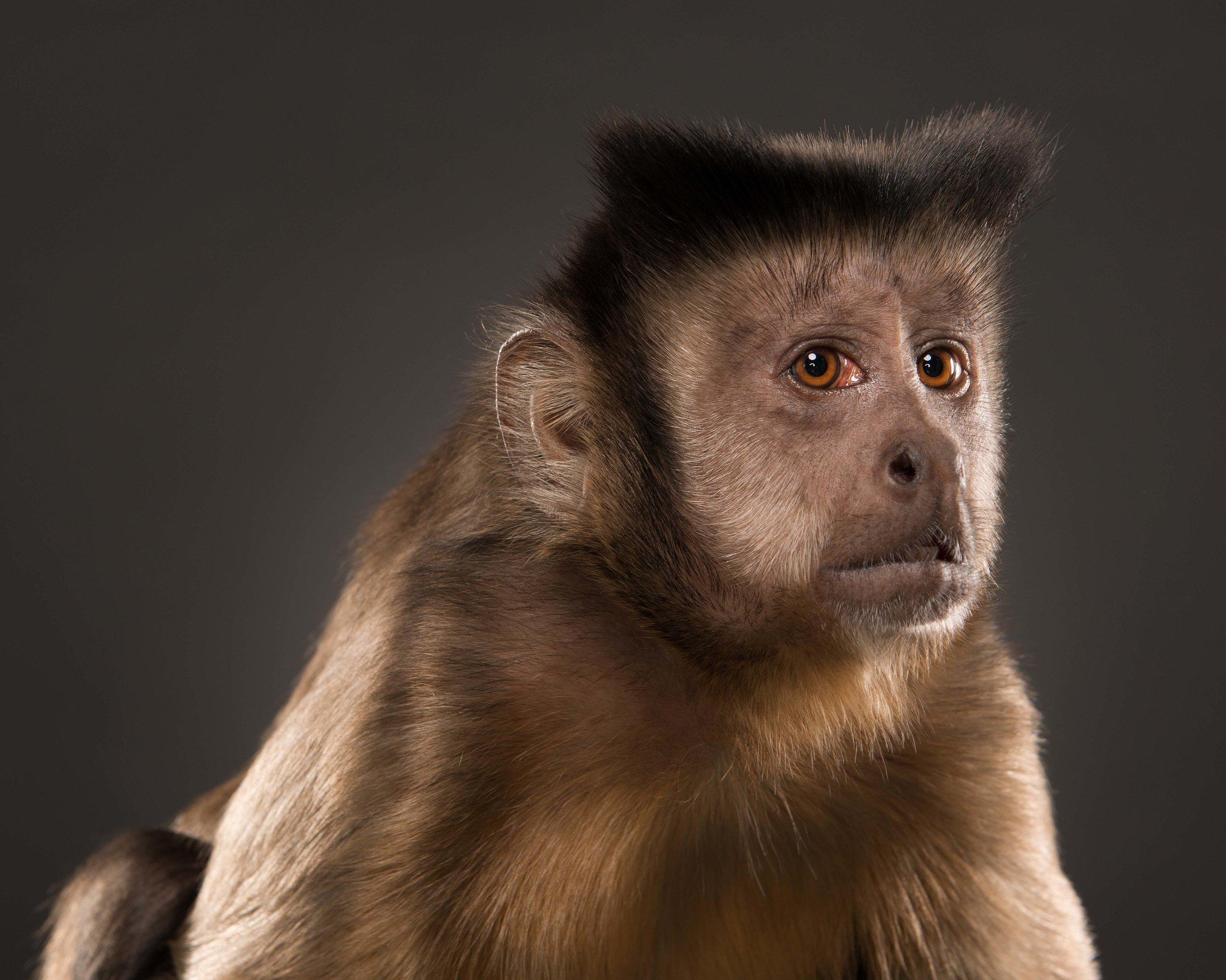 Monkey V