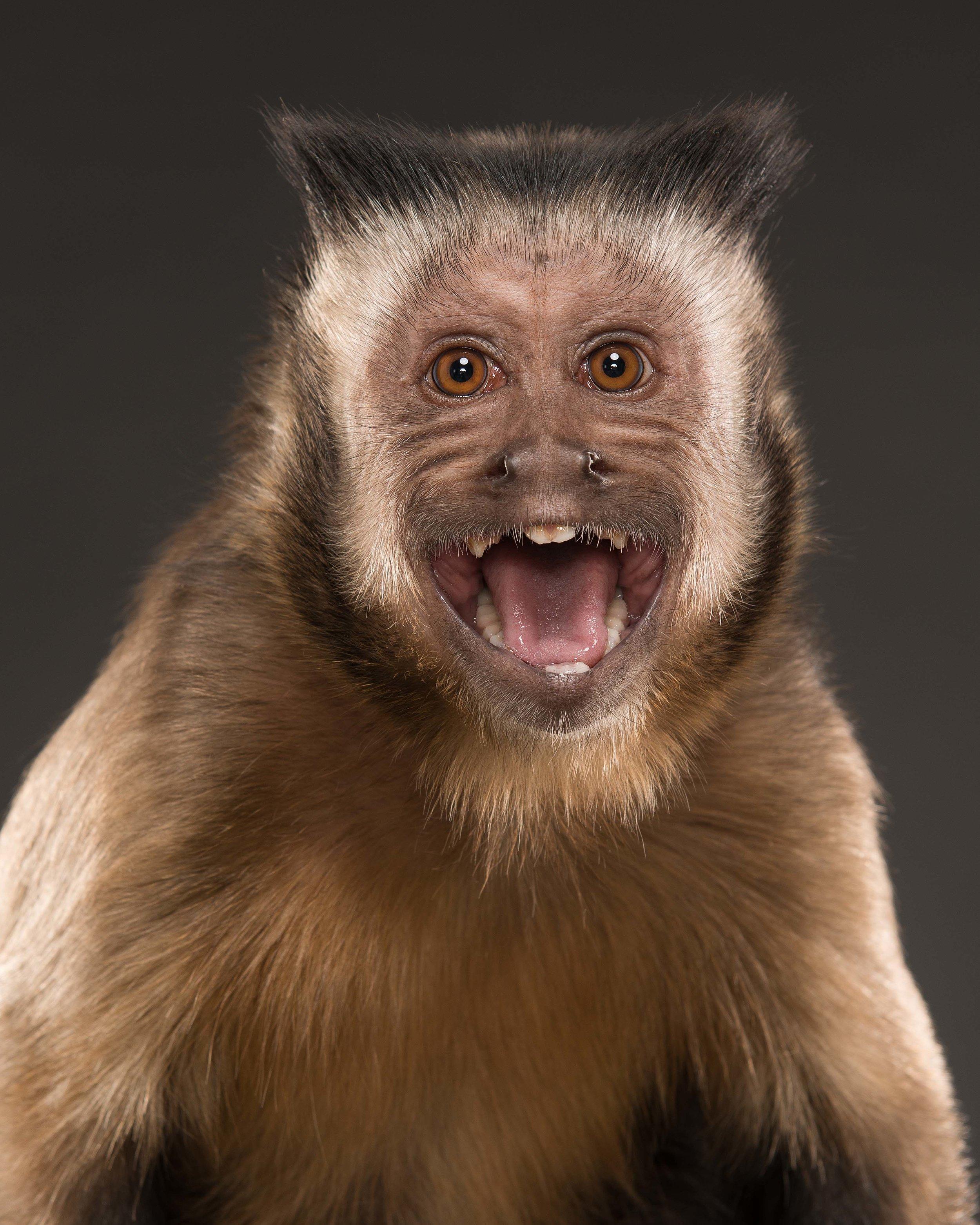 Monkey VI
