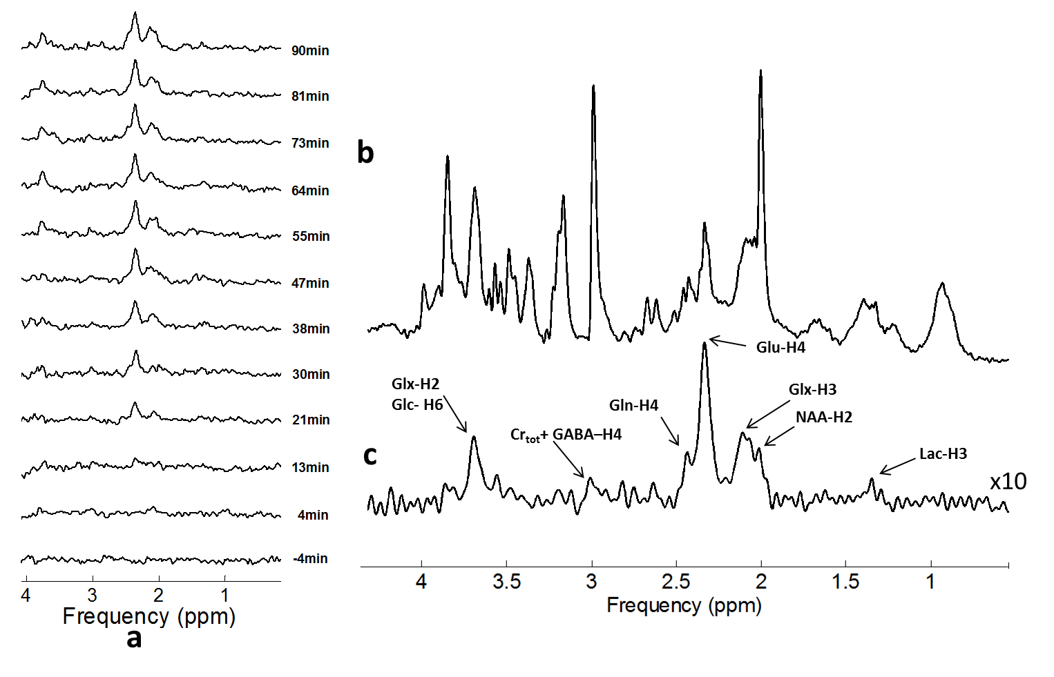 Dynamic in-vivo 13C MRS of the rat brain during infusion of 13C labelled Glucose.