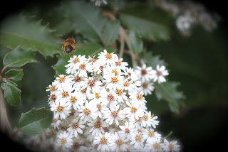 april-danann-flight-of-the-bee.jpg