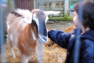 April-Danann-Goat.jpg