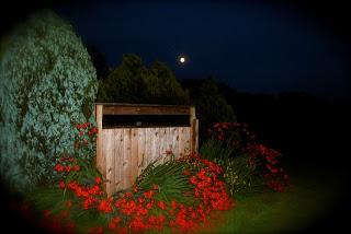 April Danann Moon and Flowers Aug 1st 2012.jpg