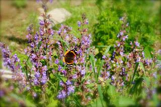april-danann-Butterfly.jpg