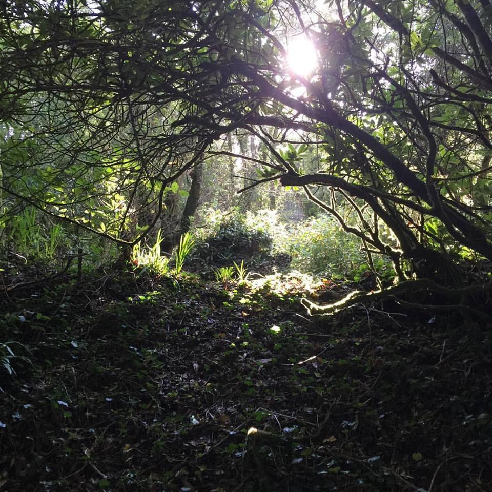 april-danann-sunshine-through-trees.jpg