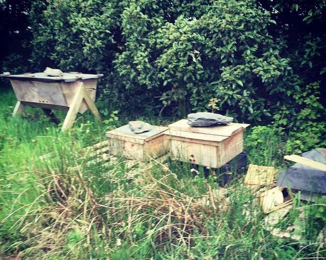 april-danann-bee-hives.jpg